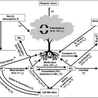 (PDF) Stable Isotopes in Plant Ecology