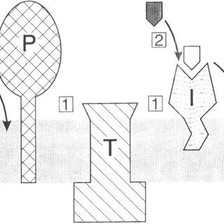 Nisin-controlled gene expression. NisK indicates histidine
