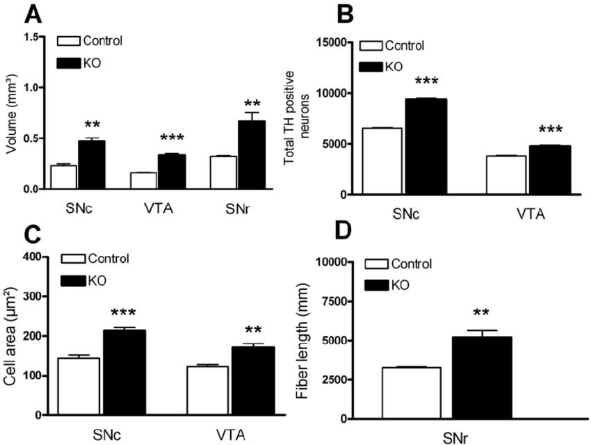 The lack of PTEN in DA neurons results in a significant