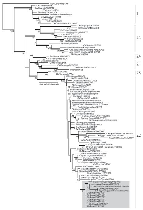 Phylogenetic relationships of the hemagglutinin (HA) gene