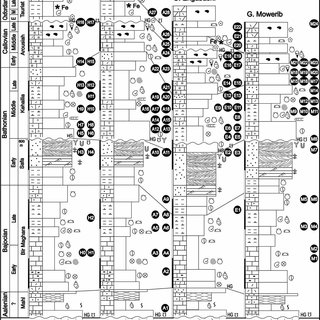 (PDF) Quantitative biostratigraphy of the Middle to Upper