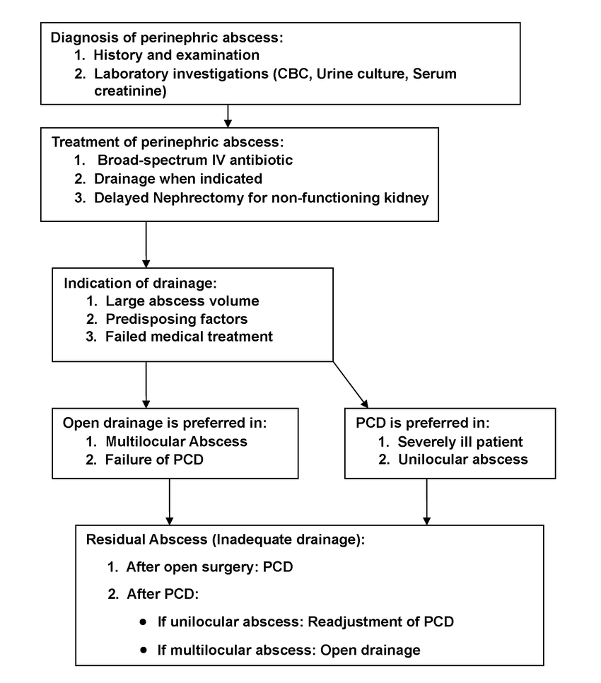 hight resolution of algorithm for management of perinephric abscess pcd percutaneous tube drain cbc complete