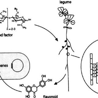 Plant growth promoting rhizobacterial mediated