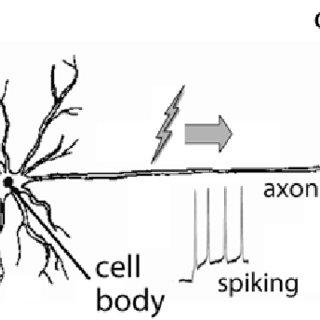 (PDF) Functional MRI