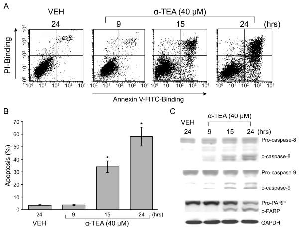 α-TEA induces apoptosis in human breast cancer cells. A