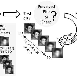 Perceptual Score experiment. Adapting images were