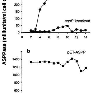ASPPase activities and glycogen content in E. coli BL21