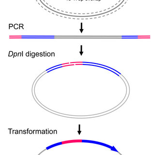 (PDF) FastCloning: A highly simplified, purification-free