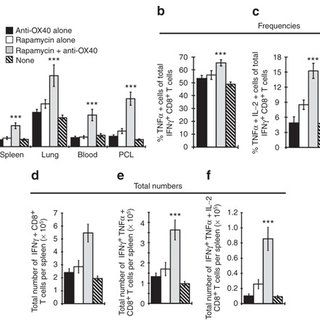 (PDF) Combined mTOR Inhibition and OX40 Agonism Enhances