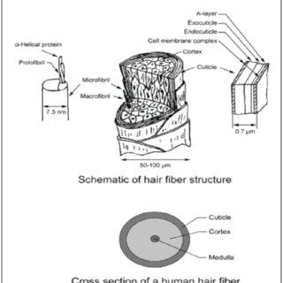 (PDF) Human Hair: A Biodegradable Composite Fiber–A Review