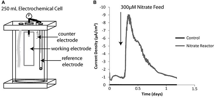 Sediment free bioreactor schematic including three