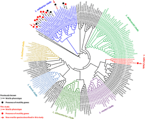 16S rRNA gene phylogeic tree and motility of