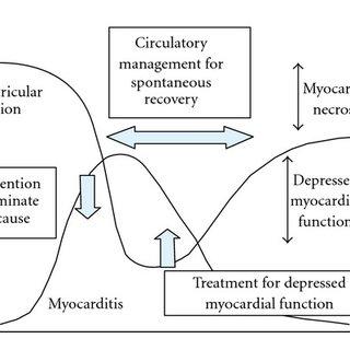 (PDF) Myocarditis Associated with Influenza A H1N1pdm2009