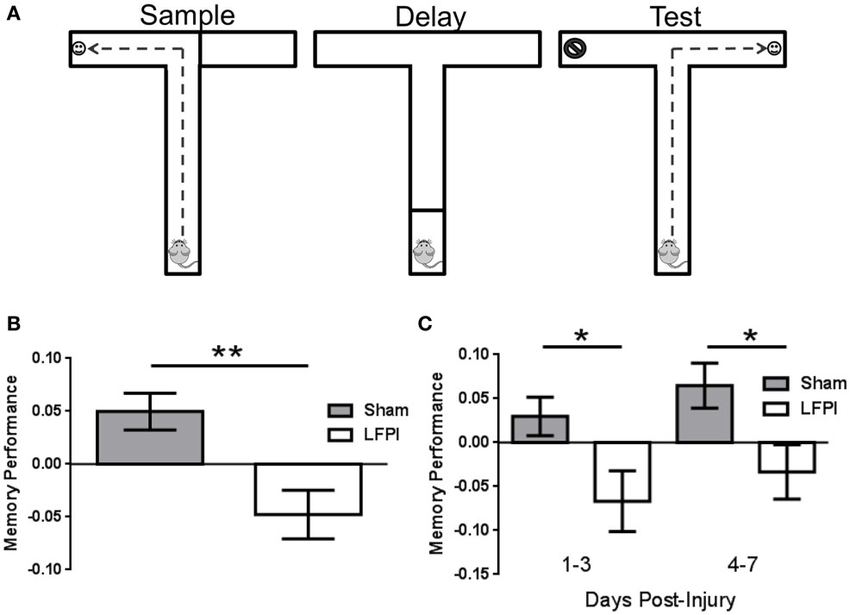 Persistent working memory impairment immediately following