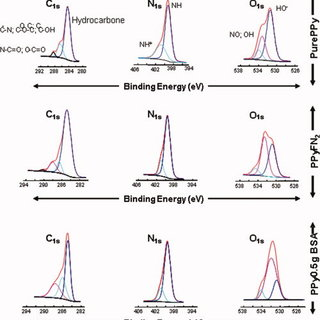 SEM analyses of protein-rich PPy/PLLA materials containing