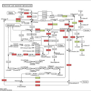 Fructose and mannose metabolism pathway. The following