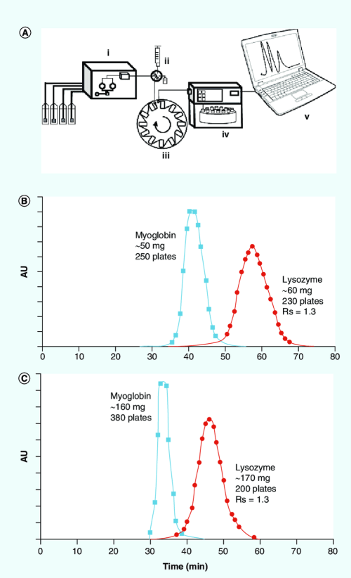 small resolution of countercurrent chromatography purification of myoglobin and lyzozyme download scientific diagram