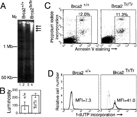 Gross chromosomal rearrangements and genetic exchange
