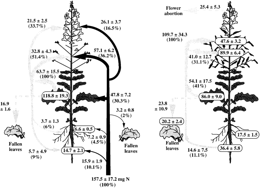Plant Diagram Unlabelled