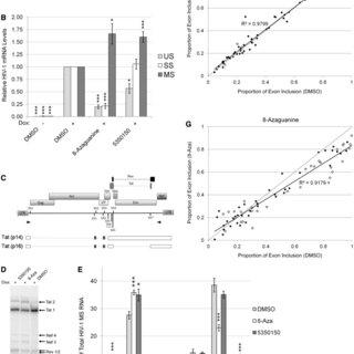 (PDF) Characterization of novel inhibitors of HIV-1