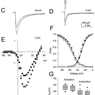 Block of D1-like dopaminergic Na current modulation by an