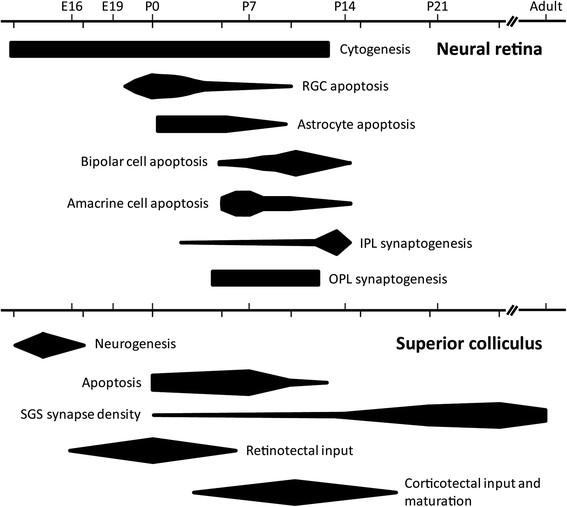 Developmental epochs in the rat neural retina and superior