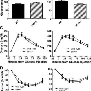 Glucose homeostasis in weight-matched WT and BBKO mice. A