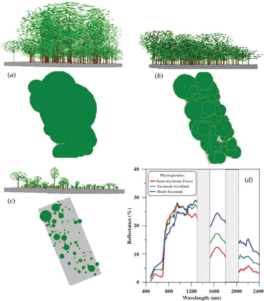 hight resolution of profile diagrams representative of a semi deciduous forest b savannah