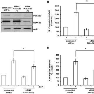 Role of S1PR in the effect of S1P on smooth muscle marker