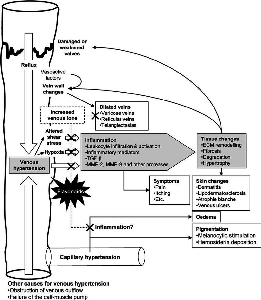 medium resolution of pathogenesis of chronic venous disease cvd and mechanisms of download scientific diagram