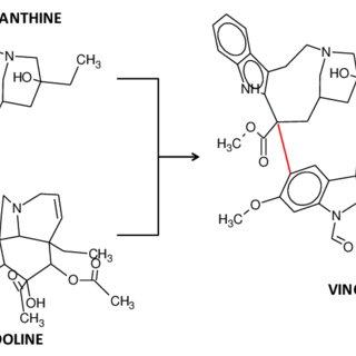 (PDF) VINCRISTINE AS AN INDUCTOR OF DRUG RESISTANCE MARKER