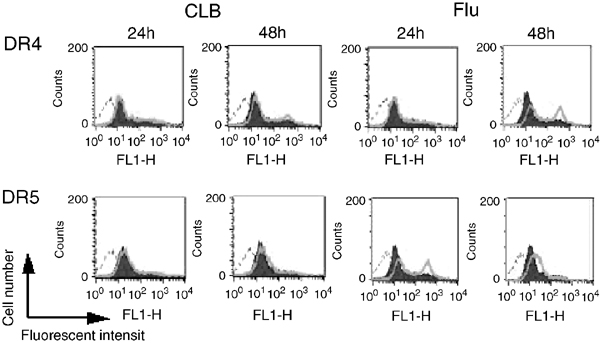 DR4 and DR5 cell surface expression levels following