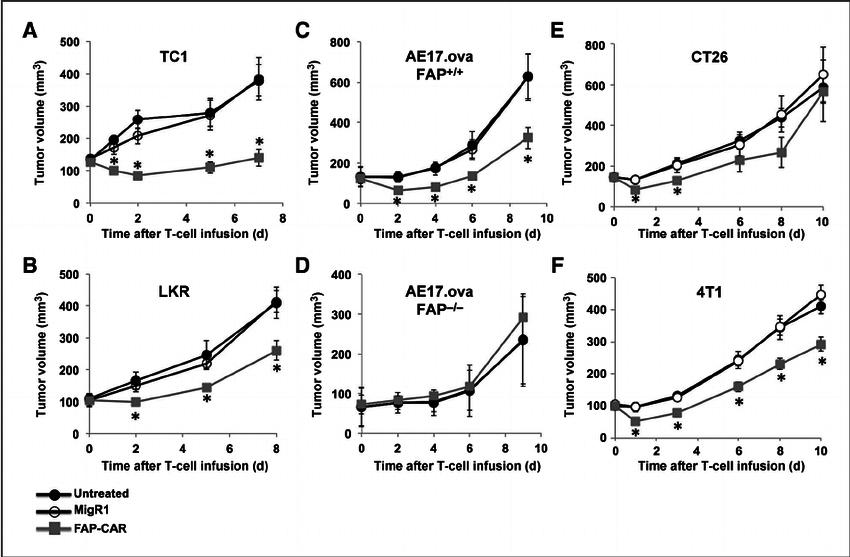 Antitumor activities of FAP-CAR T cells in mice bearing fl