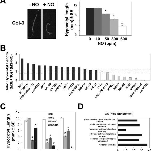 csu2 suppresses cop1-6 in darkness. (A-B) Hypocotyl length