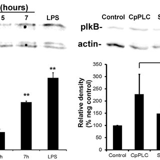 The present study suggests a model where CpPLC activates