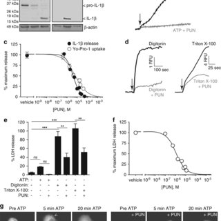 Punicalagin blocks mature IL-1β release and membrane