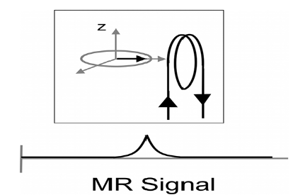 Measurement of the MR signal, through the receiver coil