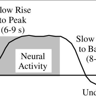 (PDF) Temporal BOLD Characteristics and Non-Linearity