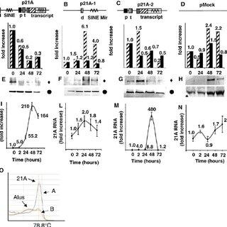 (PDF) New Small Nuclear RNA Gene-Like Transcriptional