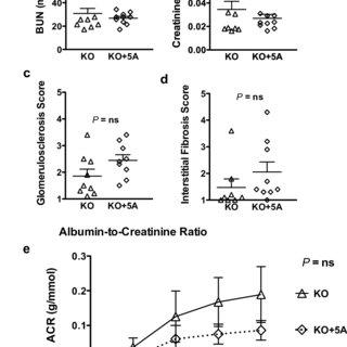 (PDF) Antagonism of scavenger receptor CD36 by 5A peptide