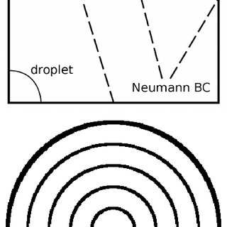 Phase diagram schematic of the first-order isotropic