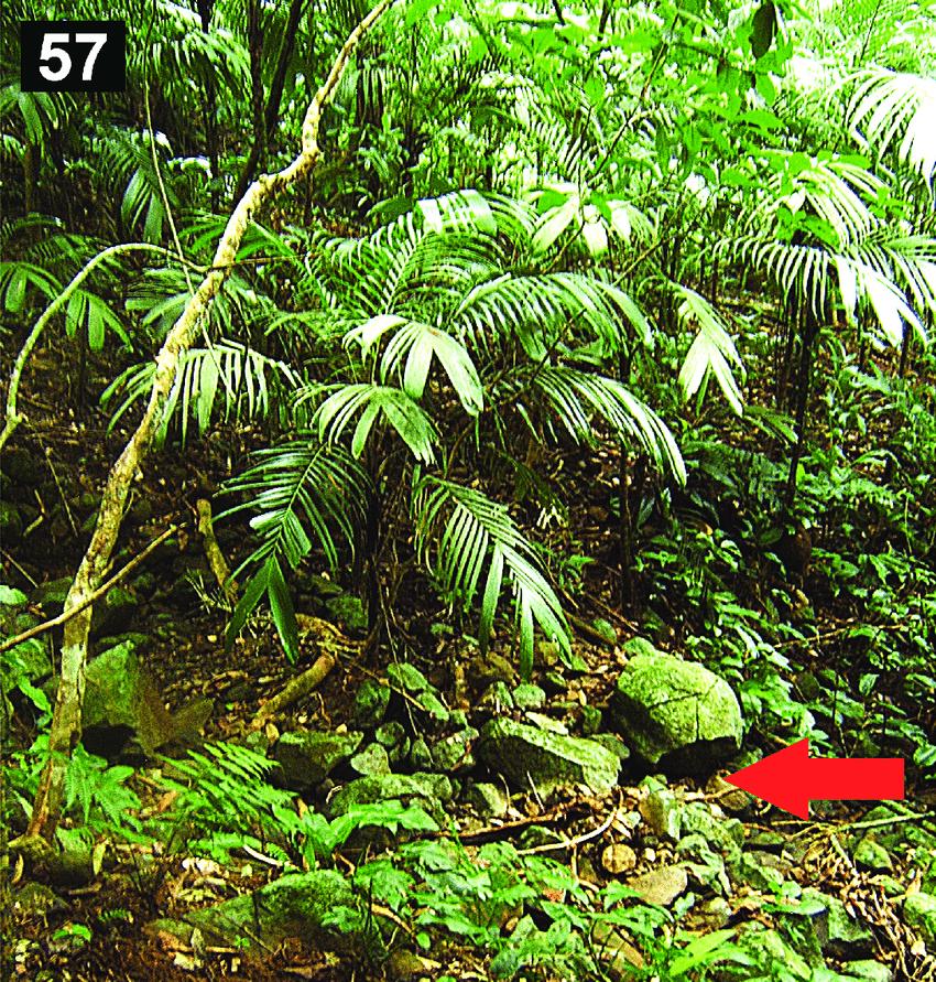 diagram of a tropical forest p90 wiring guitar rain in the estacion de biologia los tuxtlas veracruz