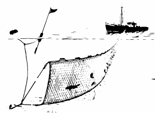 5 Runaround gillnet fishery. This gillnet method is used