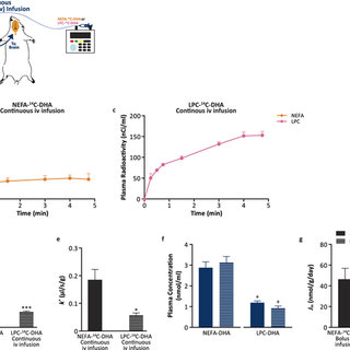 Plasma LPC-DHA contribution to brain total DHA uptake via