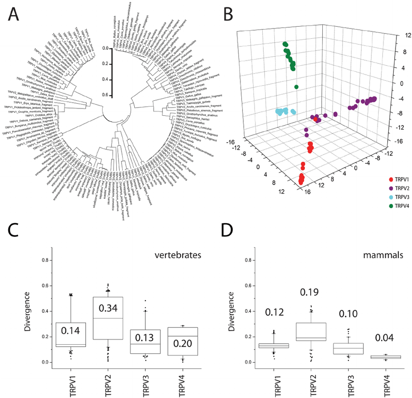 TRPVs phylogeny. A. Radial phylogenetic tree for TRPVs