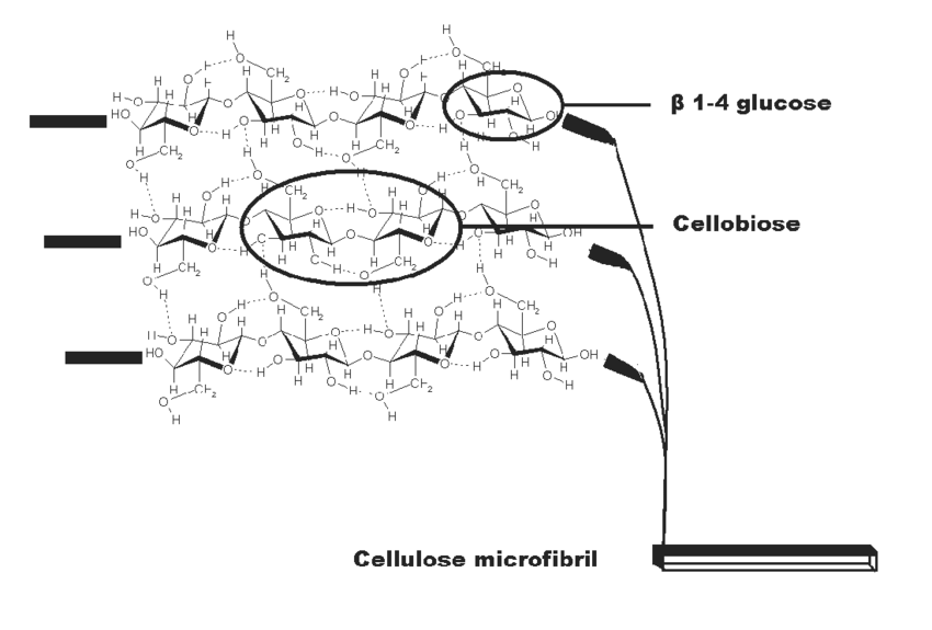 Schematic illustration of a cellulose molecule forming