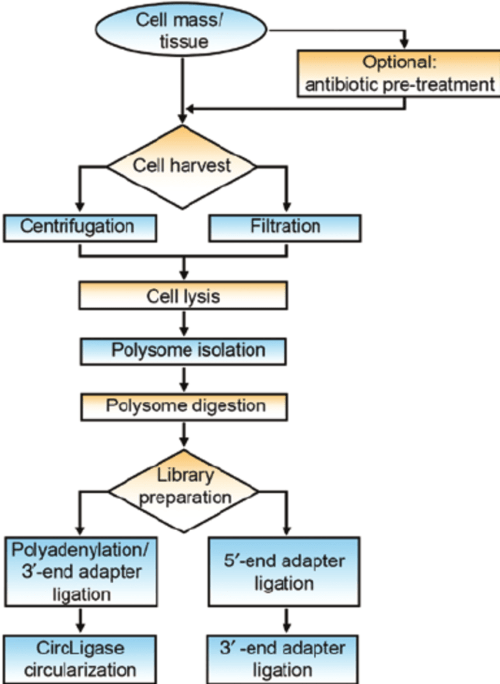 small resolution of flow chart of isolation of intact ribosome mrna complexes and library preparation for the ribosome profiling experiment crucial steps at which specific