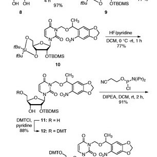 Site-directed mutagenesis of pGFPuv to introduce a stop