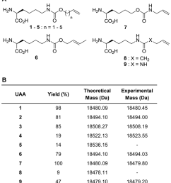 genetic incorporation of alkene lysine analogs into myoglobin by the wild type mbpylrs  [ 850 x 955 Pixel ]