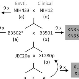 (PDF) Congenic Strains of the Filamentous Form of Cryptococcus neoformans for Studies of Fungal